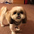 Sean Rono avatar image