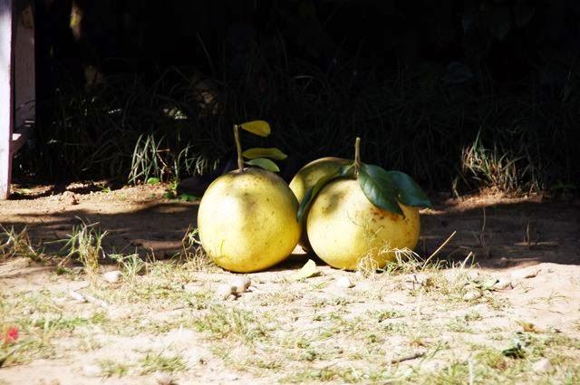 達人帶路-環遊世界-尼泊爾PoonHill健行-大柚子