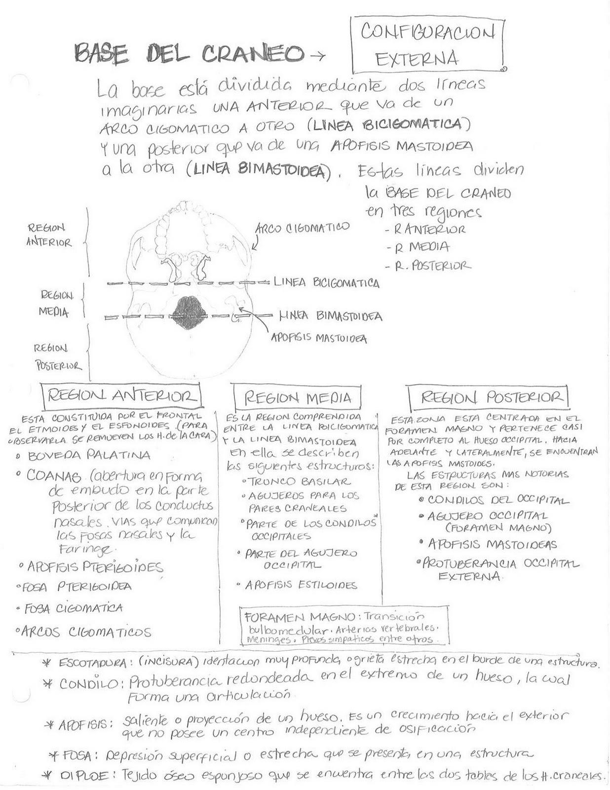 Anatomía Humana... Para Humanos: Sistema Oseo - Base del Craneo