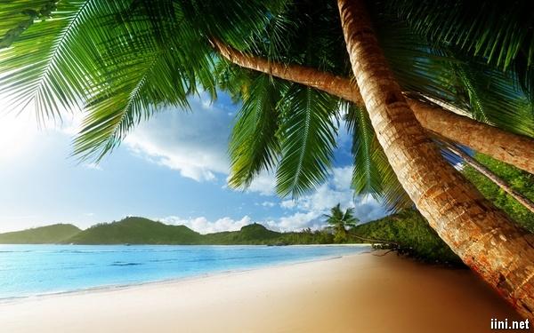 ảnh hàng dừa bên bờ biển đẹp