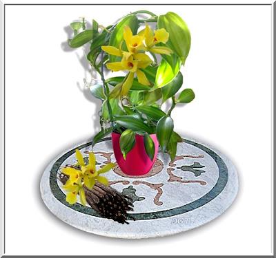 http://tunturuntun-com.blogspot.com.es/2011/03/vanilla-planifolia-vainilla.html