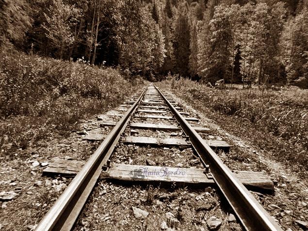 cale ferata mocanita iulie 2013