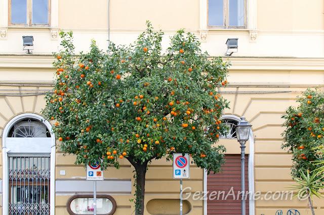 Sorrento sokaklarındaki mandalina ağaçları