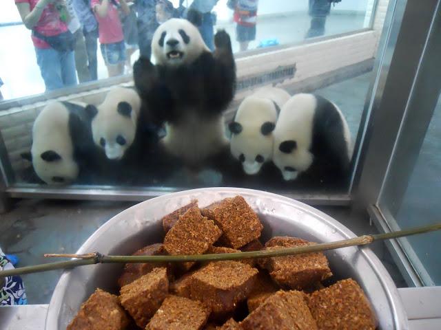 Me want panda cake now!