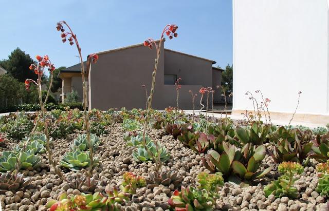 cubierta vegetal cubiertas vegetales techos verdes green roof