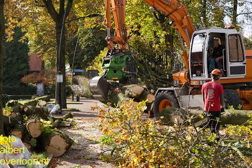 Bomen gekapt Museumlaan in overloon 20-10-2014 (33).jpg