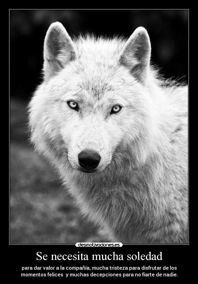 Me Considero Como Un Lobo Solitario Que Anda Solo La Mayor Parte De