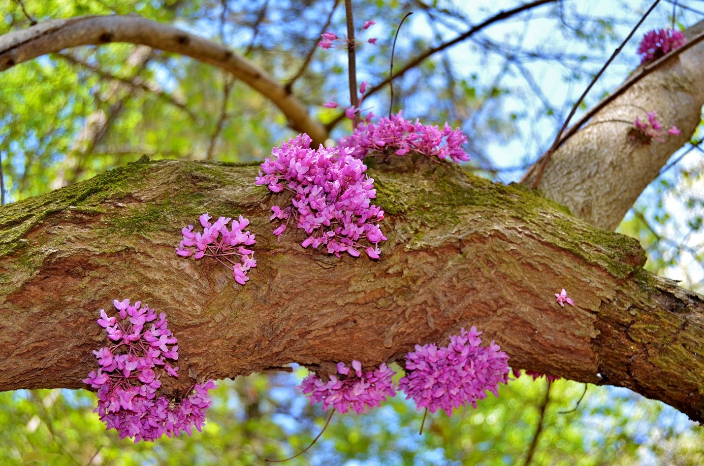 William b umstead state park take a hike - Flowers that grow on tree trunks ...