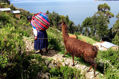 Woman with a llama Isla del Sol on Lake Titicaca in Bolivia