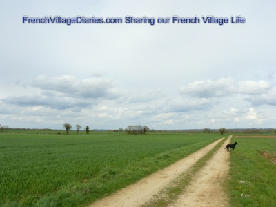 french village diaries silent sunday dog walking deer France