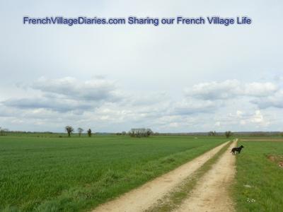 french village diaries silent sunday dog walking deer France