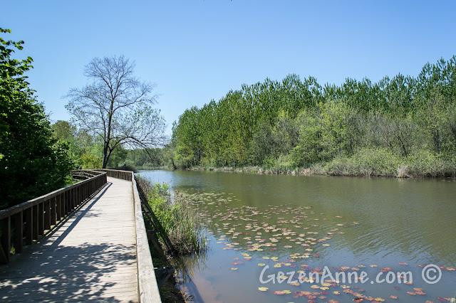 Sakarya, Karasu'daki Acarlar Longozu, göl ve köprü