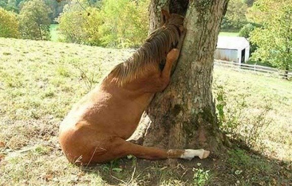 Cavalo curioso...