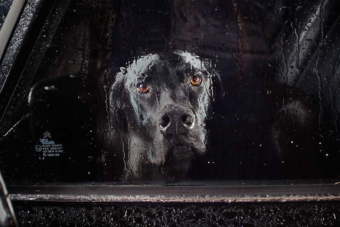 *被鎖在車內沉默的狗:攝影師Martin Usborne 黑暗呈現! 1