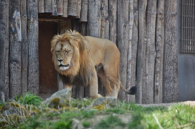 th ringer zoopark in erfurt ausflugstipps f r deutschland. Black Bedroom Furniture Sets. Home Design Ideas