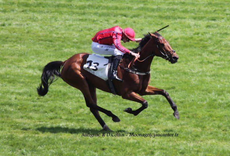 Photos Auteuil 17-05-2015 Journée du Grand Steeple IMG_9982
