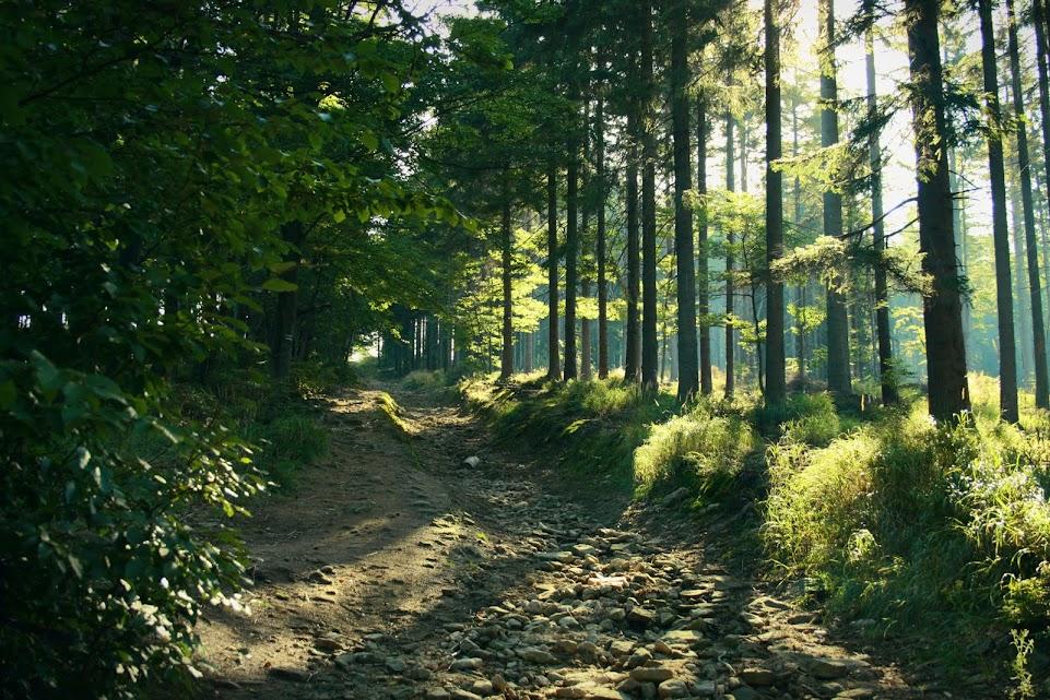 Szlak na Malinów
