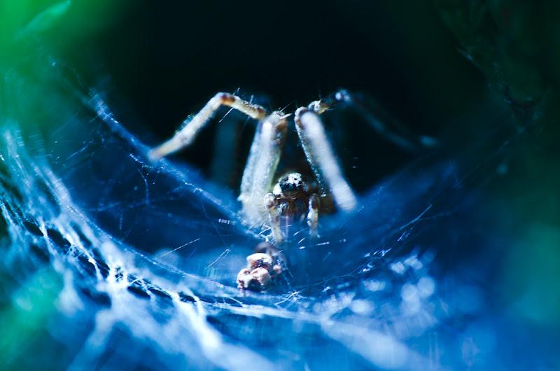 l'araignée étrange et sa toile... 20110828_01_arachnide_DSC4915-2