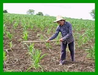 agricultor-300x225.jpg