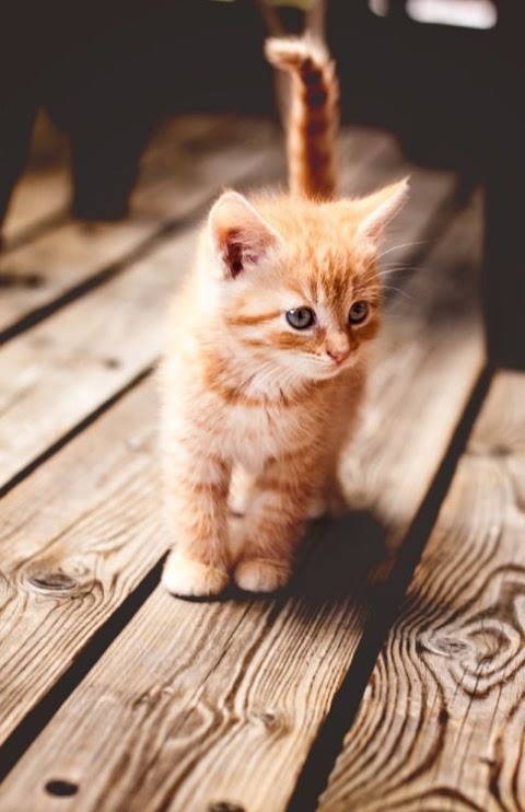 Truyện audio: Điều ước của Silent - Mèo (Chương 12 - Hoàn)