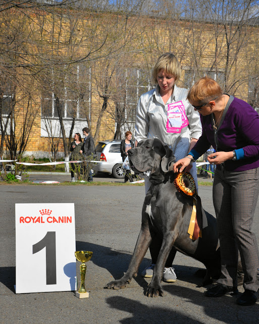 Кубок Аризоны-14(ПК)+ЧРКФ, Красноярск, 27 апреля 2014 DSC_5787