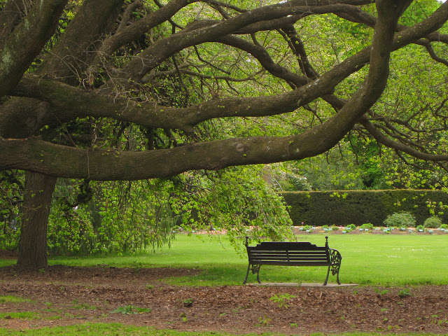Hagley Park in central Christchurch