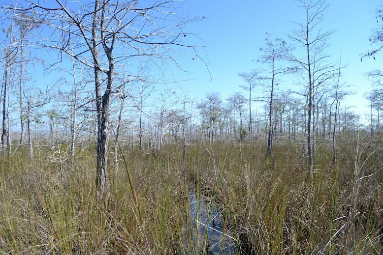 Заповедник Биг-Сайпресс, Флорида (Big Cypress National Preserve, FL)