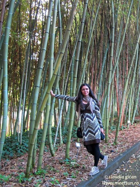 Roma. Bambus la gradina botanica