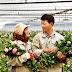 Đơn hàng nông nghiệp trồng và cắt hoa cần 3 nam, 3 nữ làm việc tại Chiba Nhật Bản tháng 01/2017