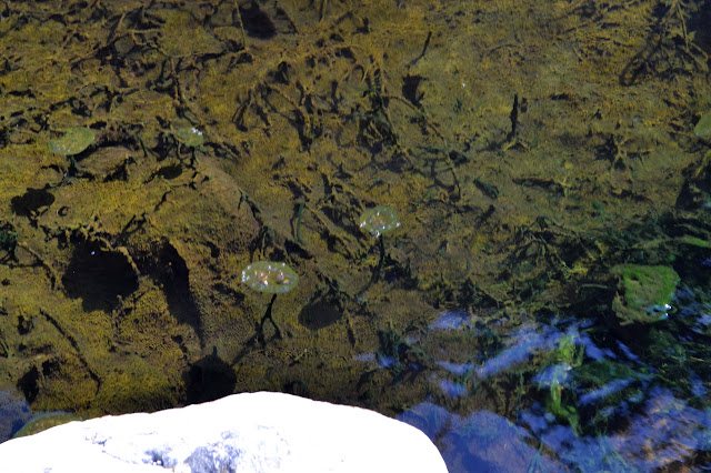 flat pads of algae at the top of the water