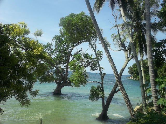 Trees in the Sea, Boljoon, Cebu, Philippines