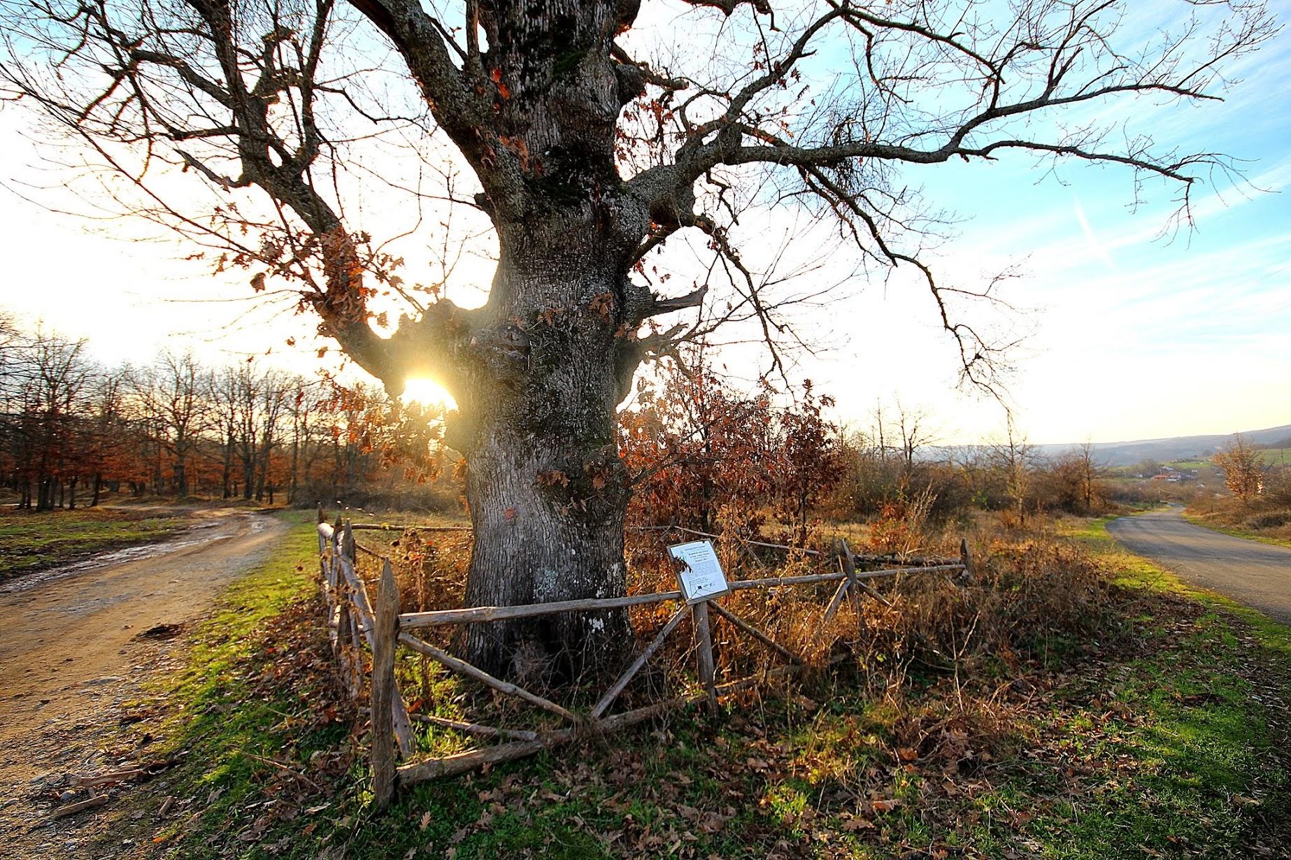снимки дърво