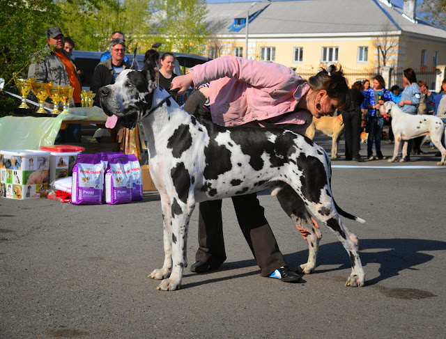 Кубок Аризоны-14(ПК)+ЧРКФ, Красноярск, 27 апреля 2014 DSC_6043
