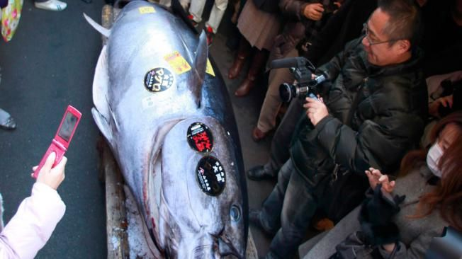 Precio récord por el atún más grande del mundo pescado!!!