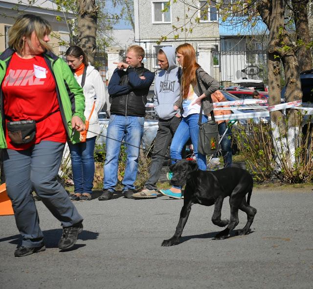 Кубок Аризоны-14(ПК)+ЧРКФ, Красноярск, 27 апреля 2014 DSC_5464