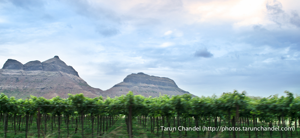 Dindori Vineyards Grapes Plantation Nashik, Tarun Chandel Photoblog