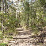 Wide trails in Watagan State Forest (362540)