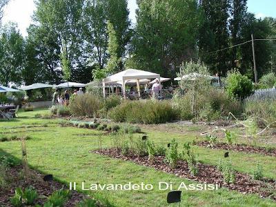 Vendita piante aromatiche ed erbe aromatiche e officinali for Vendita piante da giardino