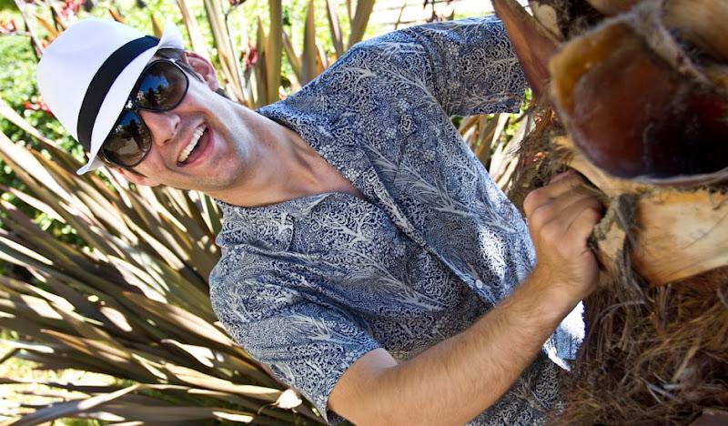 Turner Bawaiian Palm Tree Peek