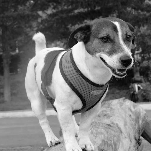 Victor Chiriboga