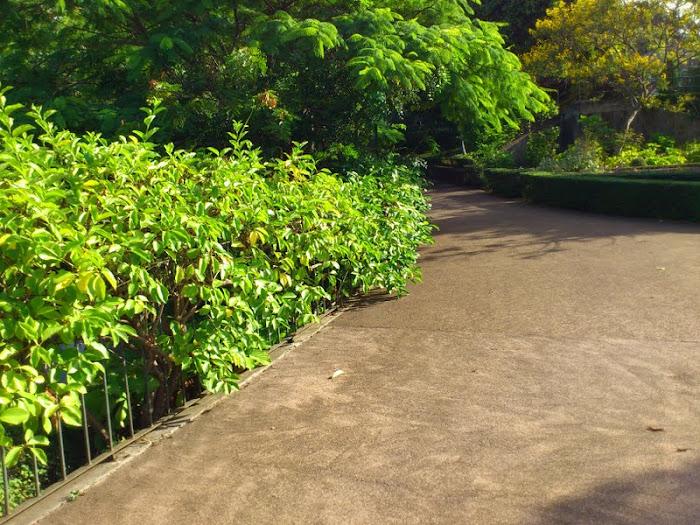 green shades in the Madeira Botanic Garden
