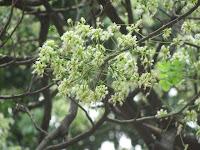 https://lh4.googleusercontent.com/-oX9hJg8TKRY/T4VJD0nDUKI/AAAAAAAAATE/fFOvt2U4ynY/s1600/ZZ+Unknown+087+Tree+-+Flower.jpg