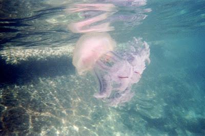 La belle méduse