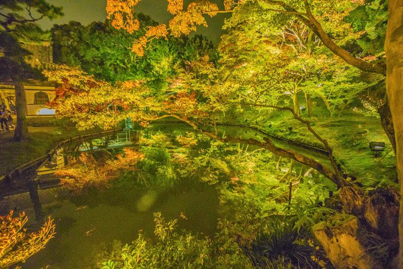 京都 高台寺 紅葉 ライトアップ 写真7