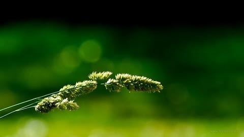 Green Grass Nature Wallpaper