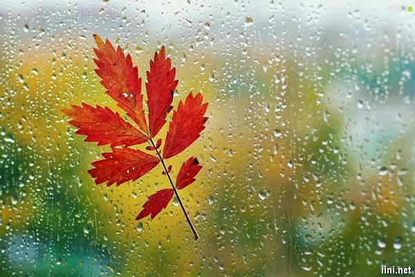 ảnh mưa mùa thu đẹp