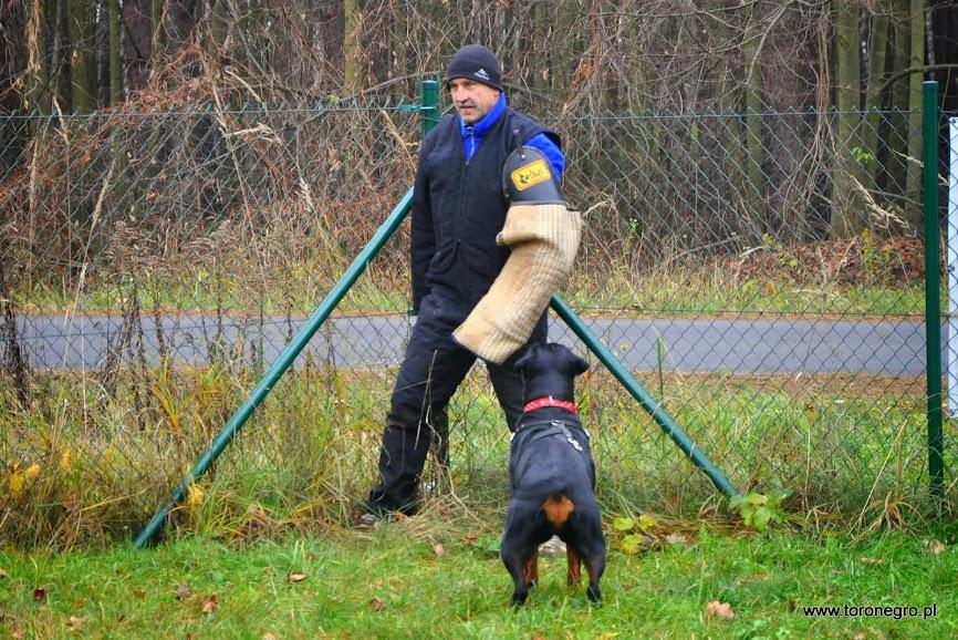 osaczenie pozoranta przez dobrego psa