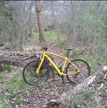 bicicleta bosque