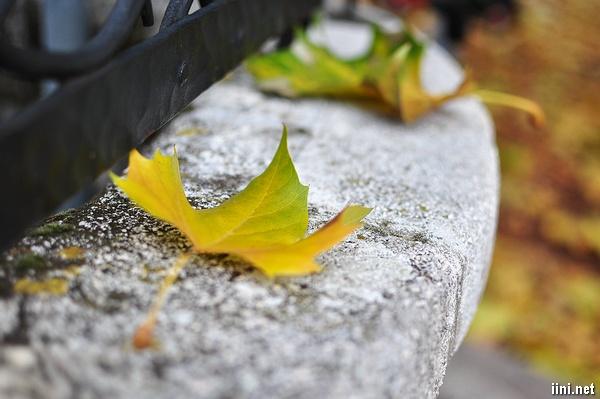 tình thơ mùa thu đến