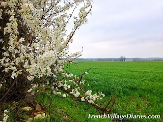 french village diaries first day of spring blossom